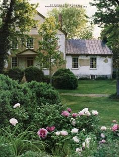 tree peonies planted by historian William Howard Adams at his Shenandoah Valley house, Hazelfield.