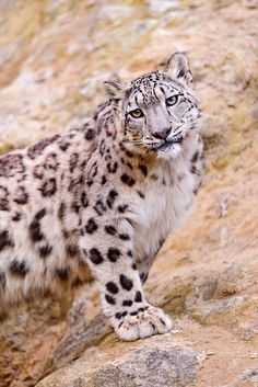 The cute Kailash posing - Last but not least, the young and nice Kailash posing and having her typical tilted head, which makes her even cuter! Chlosterli, Gockhausen, ZH, Switzerland, by Tambako The Jaguar. 2011.