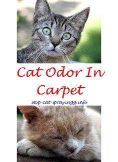 Cat Spray Animals. CatSpray Cat Urine Kitty   Best Way To Get Rid Of Cat  Odor.