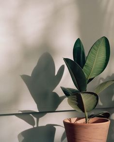 Wallpaper Iphone Aesthetic - swish and thrift- Plant Aesthetic, Beige Aesthetic, Aesthetic Photo, Aesthetic Pictures, Aesthetic Drawing, Aesthetic Vintage, Summer Aesthetic, Whats Wallpaper, Plant Wallpaper