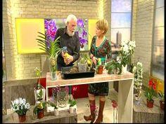 26 Orchideen richtig pflegen, gießen, und behandeln  die Wurzeln brauche...