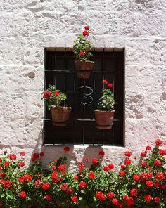 Red Flowers, Convento Santa Catalina Arequipa Peru