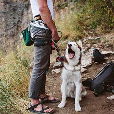 Husky adventure dog rock climbing with dad. Husky, Camping, Photo Voyage, Hiking Dogs, Kayak, Dog Travel, Trailer, Trekking, Outdoor Dog