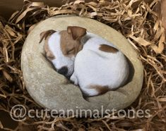 Painted Stone Jack Russell Rock Painting Animal Acrylics Painted Stone Jack Russell Pet R Painted Stone Jack Russell Rock Painting Animal Acrylics Painted Stone Jack Russ. Pebble Painting, Pebble Art, Stone Painting, Painting Abstract, Painted Rock Animals, Hand Painted Rocks, Rock Painting Patterns, Rock Painting Designs, Jack Russell Terriers