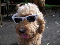 I need these sunglasses... The sun is too bright!