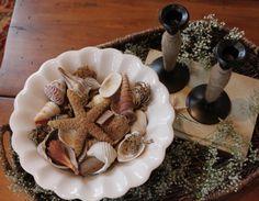 table shells