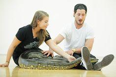 Bindi Irwin and Val Chmerkovskiy meet a giant anaconda on DWTS.