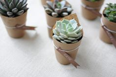 succulents wrapped up.
