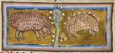 British Library Royal MS 12 C XIX (c1200-c1210) f8v