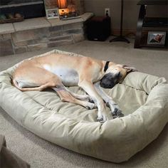 Mammoth Extra Large Dog Bed