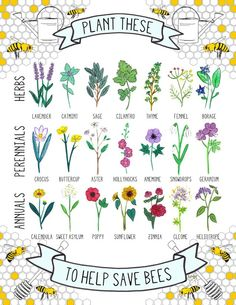 Plant these save the bees!!!!