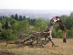 Fade Tree - Sculpture in Prague Botanical Garden Sculptures, Horses, Animals, Animales, Animaux, Animal, Animais, Horse, Sculpture