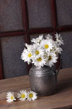 Daisies .... He loves me, He loves me not ❤ il m'aime .. X ღɱɧღ