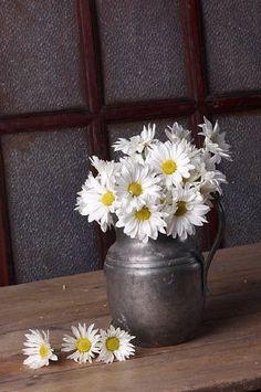 Daisies .... He loves me, He loves me not ❤ il m'aime .. X ღɱɧღ