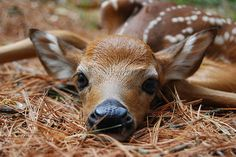 Cute, baby deer. ~ BABY ~ aka....Ted!! He must of been posing!