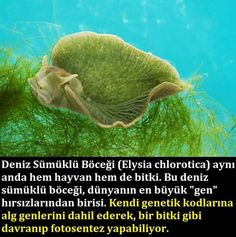 Neşe'nin gözdeleri Wtf Fun Facts, Tier Fotos, Science News, Deep Learning, Science And Nature, Biology, Personal Development, Animals And Pets, Allah