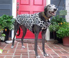 Greyhound Dog Coat Black & White Celtic Knot von TheThimbleAndHound