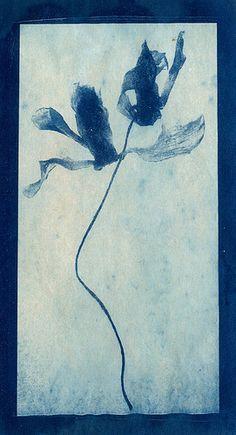 Lynnette Miller. Cyanotype on tea stained paper.