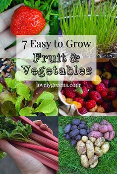 7 Easy to Grow Fruits & Vegetables herbsandoilshub. Everything you need to know to plant easy to grow fruits and vegetables in your garden. Easy Vegetables To Grow, Easy Plants To Grow, Growing Veggies, Different Vegetables, Growing Plants, Fruits And Vegetables, Fruit Garden, Edible Garden, Easy Garden