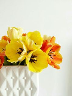 Color Combos, Tulips, Orange, Yellow, Ukraine, Garden, Flowers, Plants, Colorful