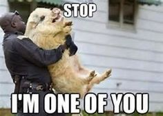 Police, dog
