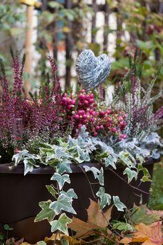 Auch im Winter schöne Balkonkästen. Ihr findet Adelheids Herbst-Winter Pflanzplan auf unserem Blog.