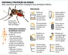 Para atacar de dia, mosquito da dengue evoluiu para ser eficiente