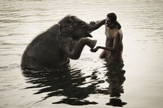 """xspanked-masters-petx:  """"True happiness comes from the joy of deeds well done, the zest of creating things new."""" ~ Antoine de Saint-Exupery vurtual:  Photo of the Elephant Caretakerby Joel Santos) The photo was taken during a morning bath, with lots of scrubbing with a coconut shell involved. Pure happiness. The elephant is an orphan juvenile and lives in Kerala, India."""