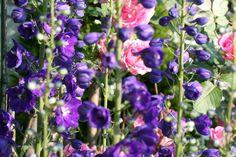 Photo by Sandi Loreen Duclos :: My garden!