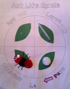 A page showing the life cycle of an ant, part of a larger set of activities… Preschool Science, Teaching Science, Science Activities, Science Projects, Preschool Activities, Science Fair, Science Lessons, Teaching Ideas, Art Projects