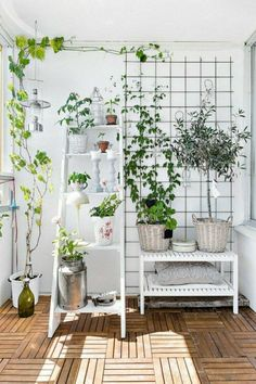 natural decoration ideas for the balcony with potted plants – Small Balcony Decor Ideas Balcony Plants, Balcony Garden, Indoor Garden, Indoor Plants, Home And Garden, Balcony Ideas, Potted Plants, Hammock Balcony, Indoor Climbing Plants