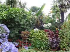 Alternative Eden Exotic Garden: Will Giles Exotic Garden Norwich