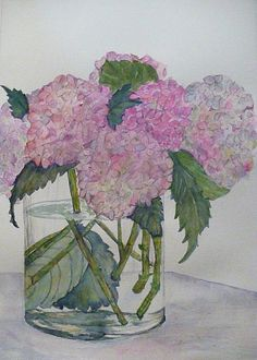 Other Hydrangea Painting by Stella Schaefer - Other Hydrangea Fine Art Prints and Posters for Sale