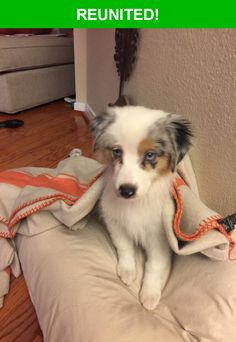 Great news! Happy to report that Maple has been reunited and is now home safe and sound! :)