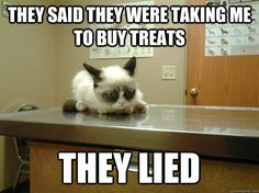 Awwww grumpy cat gets a checkup. Never lie to grumpy cat. Sad Cat Meme, Grumpy Cat Quotes, Cat Jokes, Grumpy Cat Humor, Funny Cat Memes, Funny Cats, Funny Animals, Cute Animals, Grumpy Cats