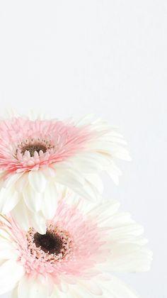 Wallpaperpinkflowers wallpapers pinterest wallpaper flower gerberas mightylinksfo