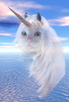 if they could make a cat/unicorn hybrid - imagine  lol