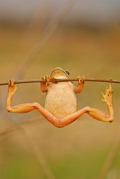 Froggy olympics ~ photo by Fernando Sanchez