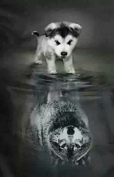 The Effective Pictures We Offer You About animal wallpaper iphone happy A quality picture can tell y Baby Animals Pictures, Wolf Pictures, Animals And Pets, Funny Animals, Strange Animals, Cute Cat Wallpaper, Animal Wallpaper, Wolf Wallpaper, Baby Wolves