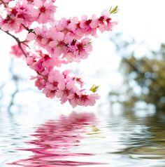 Agua y flor
