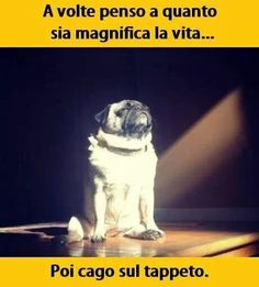Le perle di saggezza di un cane.