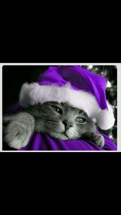 My 2 favorites, cats & purple