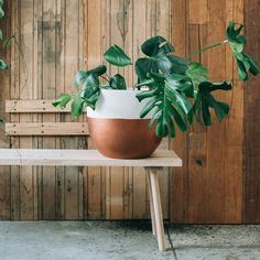 Timber bench seat and potted plant