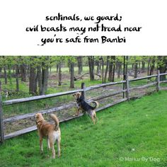 sentinels, we guard evil beasts may not tread near you're safe from Bambi  #HaikuByDog