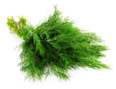 Growing Dill:  If you are a beginning gardener you may want to consider growing dill in your garden. Dill is a popular choice for many beginners and experts alike. This is because it is simple to grow if you just follow a few easy guidelines.