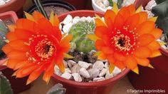 cactus-y-suculentas-tarjetas-imprimibles5