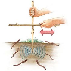Calling All Worms This surprisingly simple technique will unearth some surprising results! Find an area of loose, slightly moist soil (the dirt under a log or landscape timber works well) and push a 12- to 18-inch-long stick two to three inches into the ground. Vigorously rub another stick from side to side against it for about 2 minutes and watch as any worms in the vicinity wriggle to the surface. Try several areas in the yard to see which ones are the hottest worm hangouts.