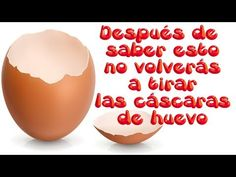 Nunca más volverás a tirar las cáscaras de huevo luego de que conozcas esta información - YouTube