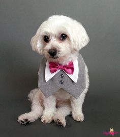 Heather Gray Dog Tuxedo with your choice of satin or cotton bow tie color.This vest is attached around the neck and hangs down in front of the dog. Perfect for weddings, family pictures, anywhere you want your pup to dress up a bit without really wearing clothes.