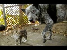 gatto disabile e cane